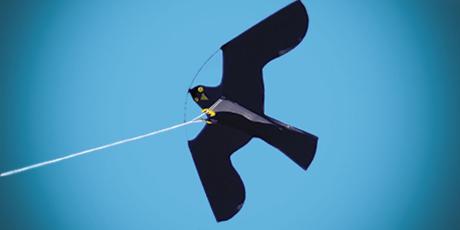 Scare'm Hawk Complete