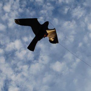 Scare'm Hawk Kite